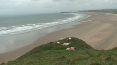 Sheep at Rhossili Bay (1) Stock Footage
