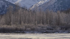 Alaska Winter Sunny Chilkat River Slow Pan Icy Trees - stock footage
