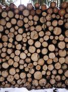 Wood firewood Stock Photos