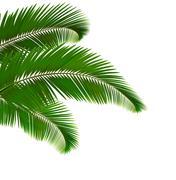 Palm leaves on white background. vector illustration. Stock Illustration