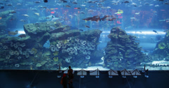 Ultra HD 4K Aquarium Dubai Mall World Largest Shopping Center Downtown People Stock Footage
