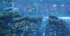 Ultra HD 4K Inside Aquarium Dubai Mall Shopping Center Interior Stingray Sharks Stock Footage