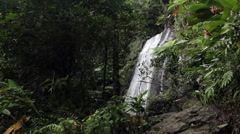 El Yunque rainforest waterfall jungle Puerto Rico HD 1763 Stock Footage
