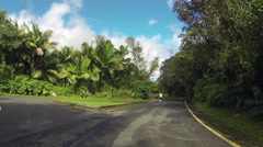Friends walking El Yunque Rainforest road HD 0233 Stock Footage