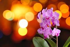 Orchid with lights Stock Photos