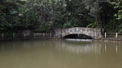 Jungle pool El Yunque Rainforest Puerto Rico HD 1775 Stock Footage