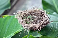 nests on the leaf. - stock photo