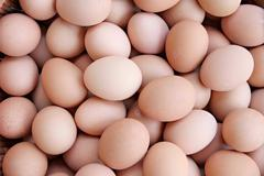 Stack of fresh egg container box. Stock Photos