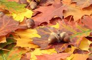 Stock Photo of Autumn leaves and oak nuts on a ground