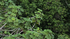 Jungle trees El Yunque Rainforest Puerto Rico HD 0688 Stock Footage