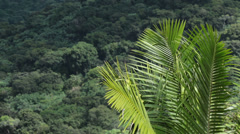 Palm tree forest mountain El Yunque Rainforest HD 0700 Stock Footage
