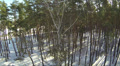 Tree in winter wood .Aerial Footage