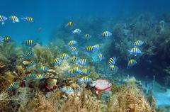 shoal of fish in a coral reef seabed - stock photo