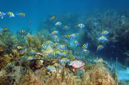 Stock Photo of shoal of fish in a coral reef seabed