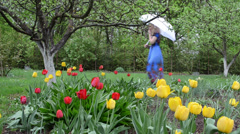 Spring garden colorful tulips  woman welly shoes walk Stock Footage