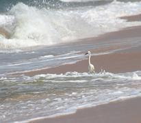 White heron on beach Stock Photos