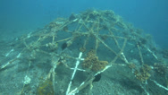 Stock Video Footage of Artificial reef covered in marine growth on ocean floor