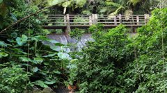 Rainforest bridge jungle El Yunque National Park HD 0722 Stock Footage