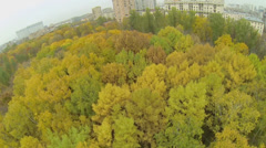Trees with colorful leaves at autumn park in Moscow Stock Footage