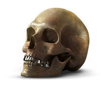 Human skull - stock illustration