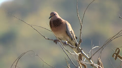 Brown bird sitting on a tree top Stock Footage