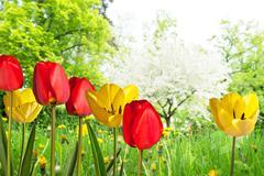 Tulips Stock Illustration