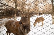 Stock Photo of deer in the zoo