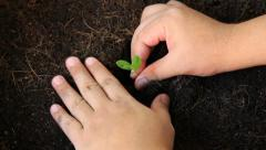 planting tree, sprout - stock footage