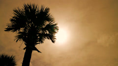 Palm Tree Shilouette - stock footage