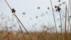 Sand Dune Weeds - stock footage