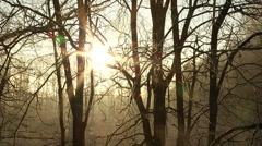 Sunrise in frozen forrest limelapse - stock footage