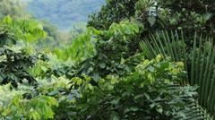 Tree jungle El Yunque Rainforest Puerto Rico HD 0669 Stock Footage