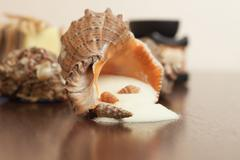 Bath accessories over wooden background salt and seashells Stock Photos