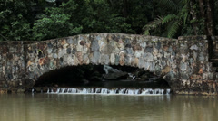 Tropical rainforest pool bridge El Yunque HD 0704 Stock Footage