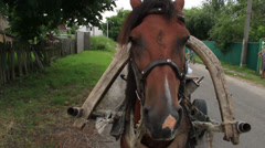 Horse close up, standing harnessed countryside village scape Stock Footage