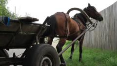 Standing stopped horse cart, grazing harnessed animal in village Stock Footage