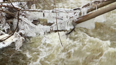 Big Icicles on Tree Trunks Flowing Creek Stock Footage
