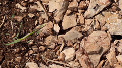 Anthill Entrance on rocky ground 4 pan Stock Footage