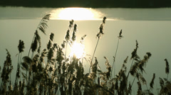 Marsh dry grass on a background sunset and lake Stock Footage
