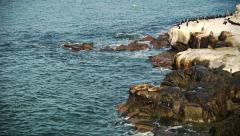 Sea Lion / Sun Bathing / Segal Stock Footage