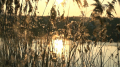 Small seeds of marsh grasses carry in the air the background a sunset and lake Stock Footage