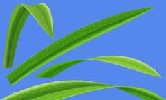 Grass water drop isolated - stock illustration