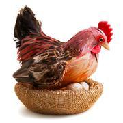 Chicken on eggs - stock photo