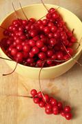 Schisandra berry Stock Photos