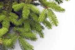 Stock Photo of Christmas tree