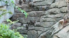 Apes on rocks - stock footage