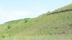 Vineyards at Mosel Valley Stock Footage