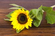 Stock Photo of sunflower on hardwood oak shelf