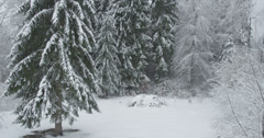 AERIAL: Frozen winter forest Stock Footage