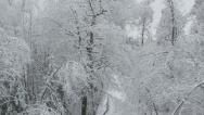 Stock Video Footage of AERIAL: Flying over snowy treetops